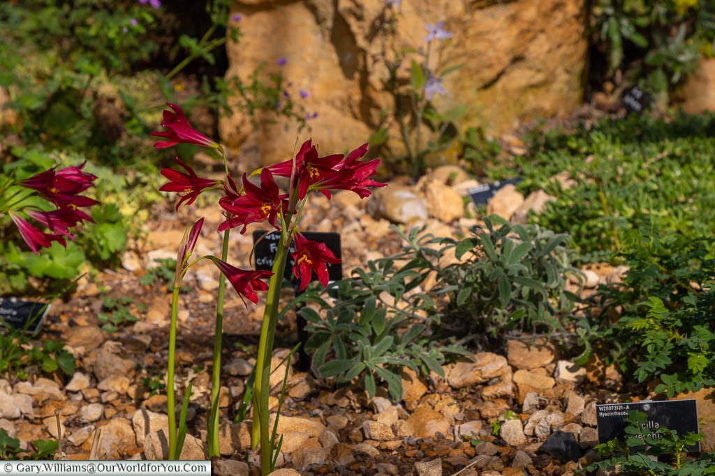 Deep red flowers stand out in the Rock Garden.