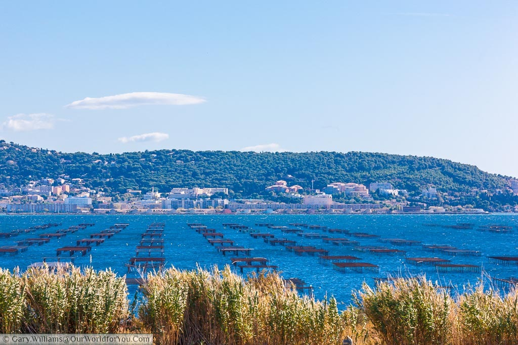 A lagoon just outside Sète in France filled with raised wooden oyster frames from which the seafood is cultivated