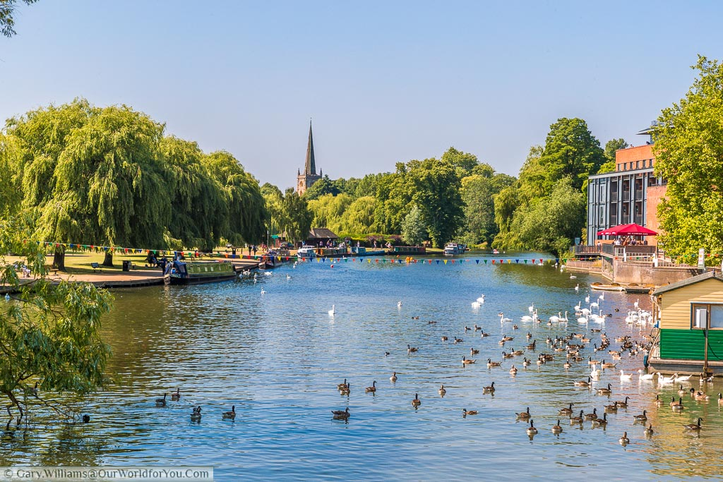 A view of the River Avon with ducks and geese floating on the water surface and canal boats moored along the leafy banks of the river's edge.