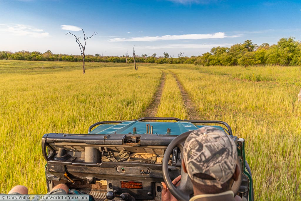 The view from the second row of the safari truck over the heads of our guide as we head out on morning safari.