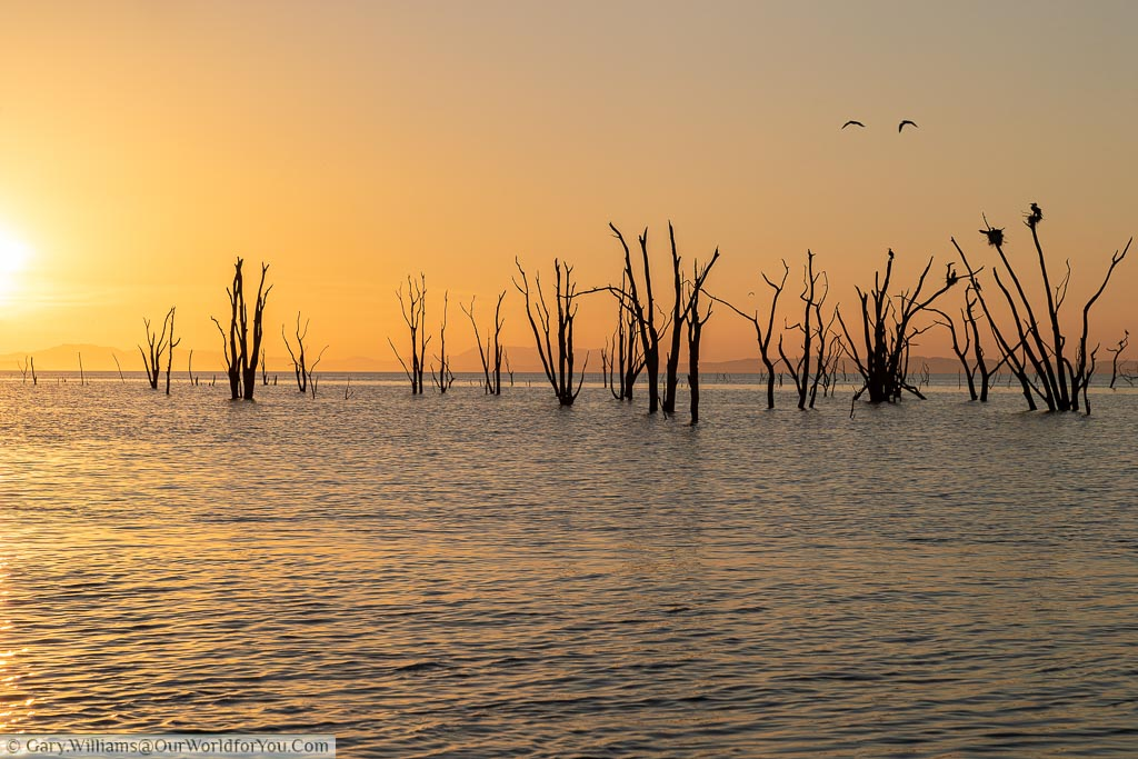 Golden light as the sun sets over Lake Kariba highlighting the petrified trees that protrude from the water in this unique landscape.