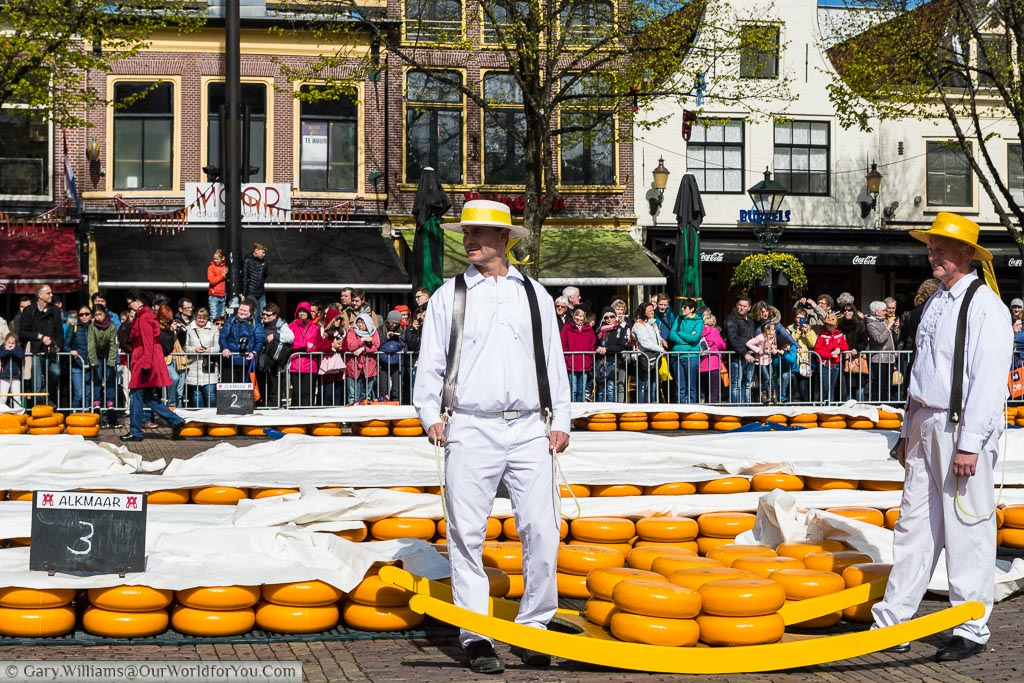 2 porters at Alkmaar's cheese market dressed in white trousers with a white shirt and wearing a boater hat coloured with the yellow ribbons. They stand between a large tray that they have to carry containing 8 large rounds of orange skinned Dutch cheese.