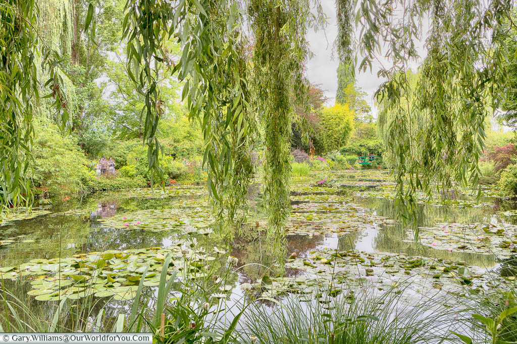 Looking through the leaves of a weeping willow tree across a lily pond towards a green bridge in the distance in Claude Monet's gardens in Giverny on a grey day in July.