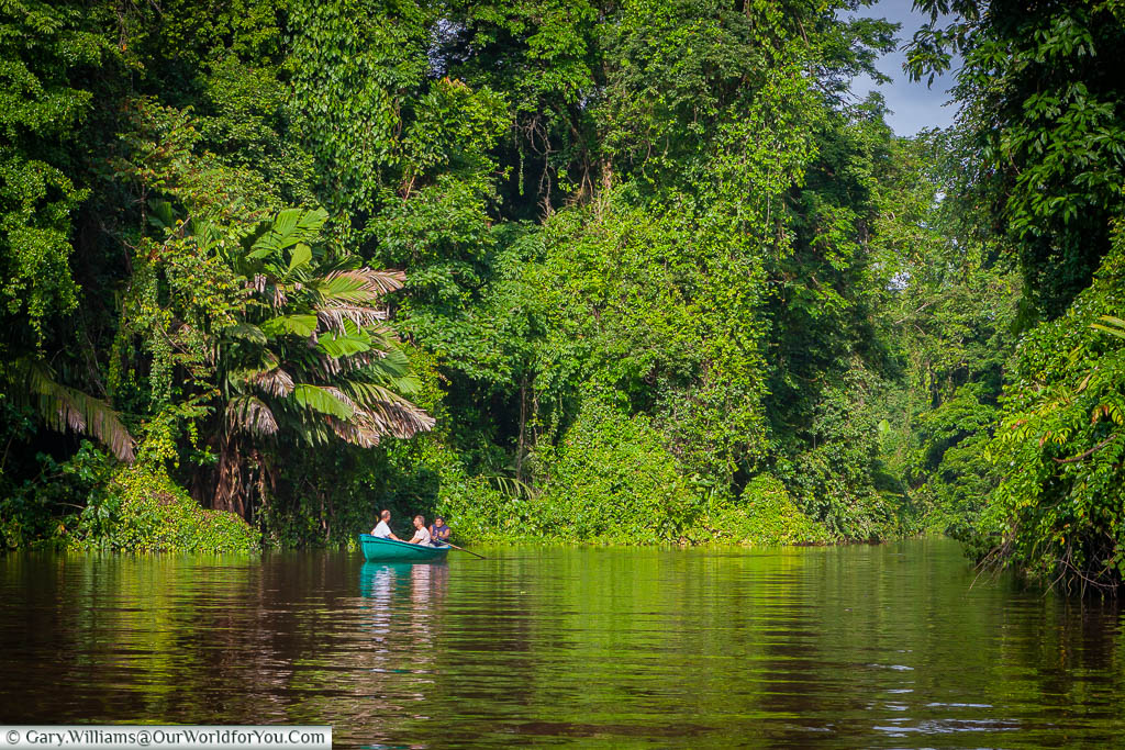 A couple being taken through the waterways of Tortuguero in a kayak against a backdrop of the lust green vegetation, Costa Rica