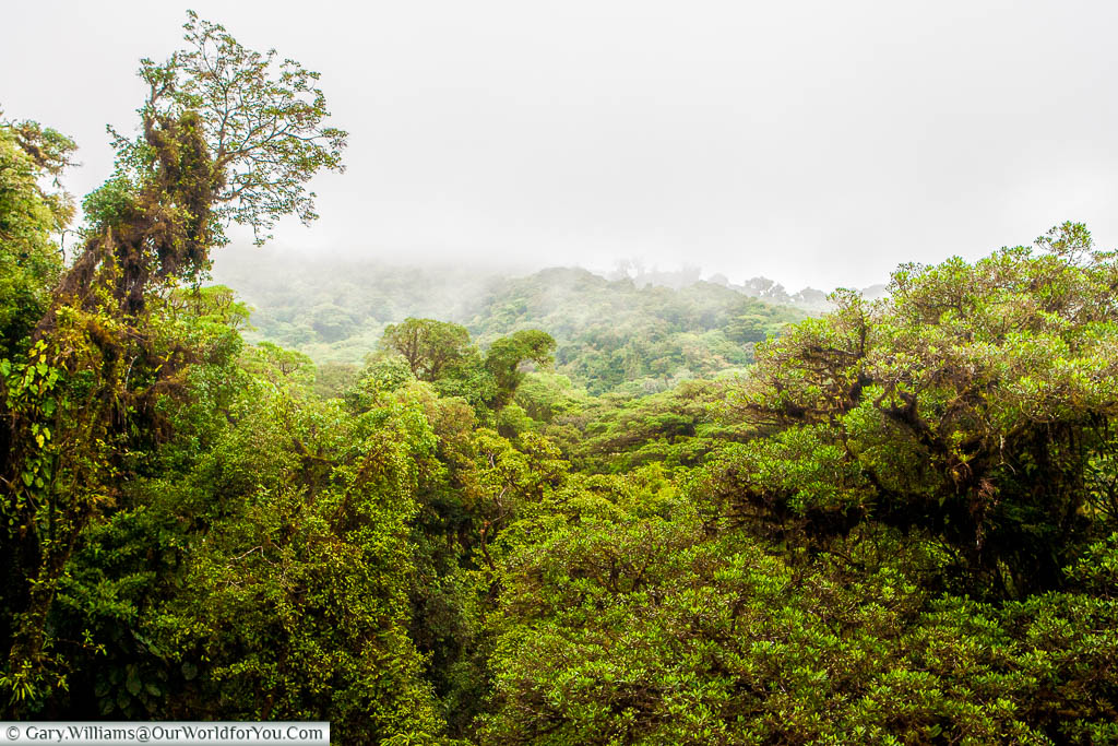 A mist engulfs the upper levels of the Cloud Forest Reserve of Monteverde in Costa Rica.