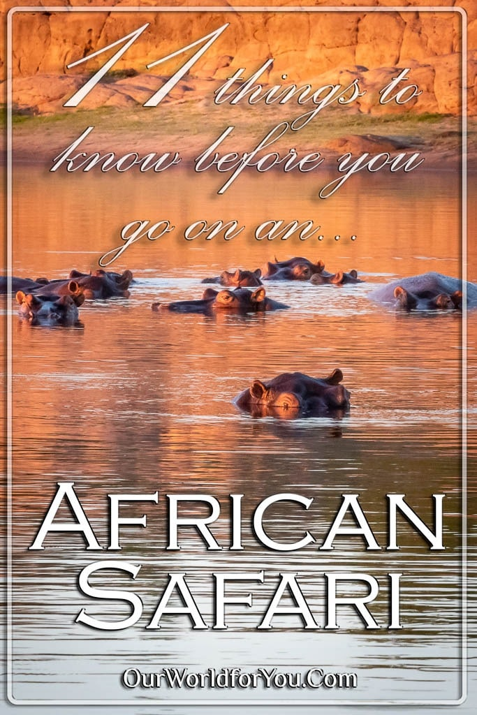 The Pin image of our post - 'An African safari, 11 things to know, before you go'