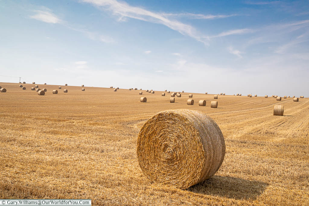 Golden rolled hay bales in a field in north Kent under a blue sky