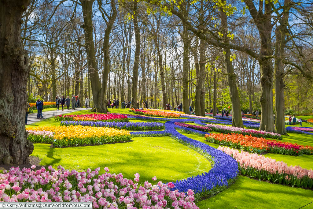 A brightly coloured giant flower constructed from beds of tulips & hyacinths  in a woodland scene in Keukenhof Gardens