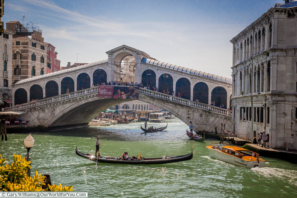 A water taxi navigates between Gondoliers in front of the Rialto Bridge in Venice