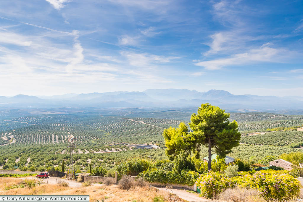 Looking from a viewpoint in Úbeda, over the vast landscape of olive groves, under a whispy blue sky, with mist hanging in front of the mountains in the distance.