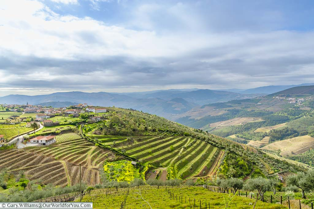 A view over the terraced vineyards of the Douro Valley, Portugal