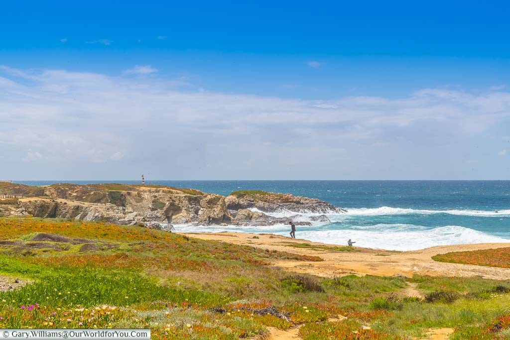 Wild flowers in the foreground as waves crash on the beach at Praia Grande de Porto Covo, Portugal