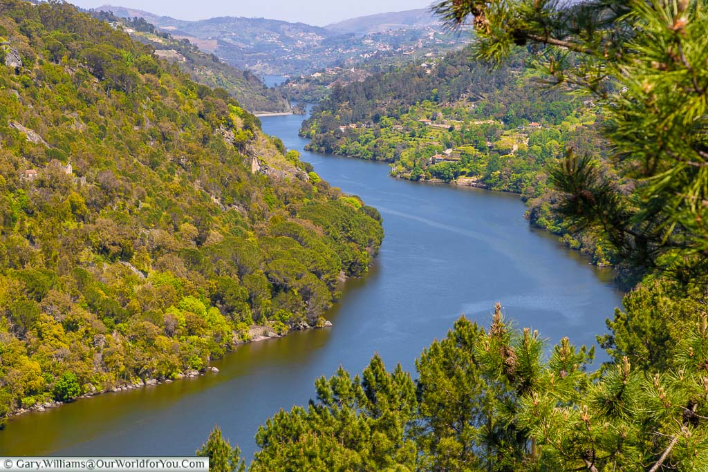 The river winding its way through the lush, steeply banked, Douro valley in Northern Portugal