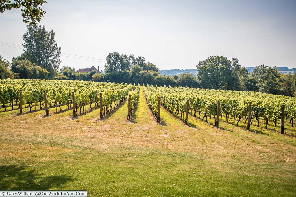 A view over the sloped ground that is now Bacchus vines. This land was once a shoreline during medieval times. We're now 11 miles from the coast.