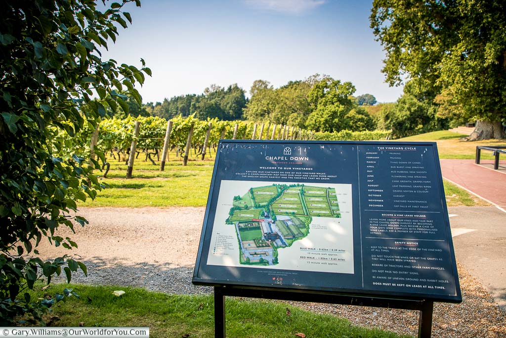 A detailed information board with a vineyard map, and walks around the vines in front of the Bacchus vines.