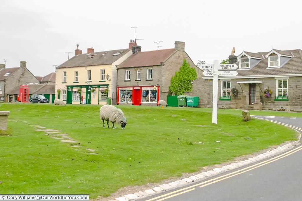 Sheep grazing in front of traditional stores in the centre of Goathland village in the North York Moors National Park in Yorkshire, England