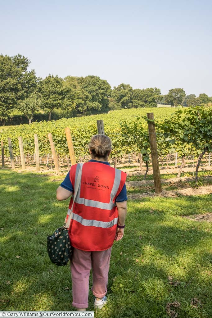 Janis in her high visibility Chapel Down gilet, a safety requirement, strolling alongside the Chardonnay vines.