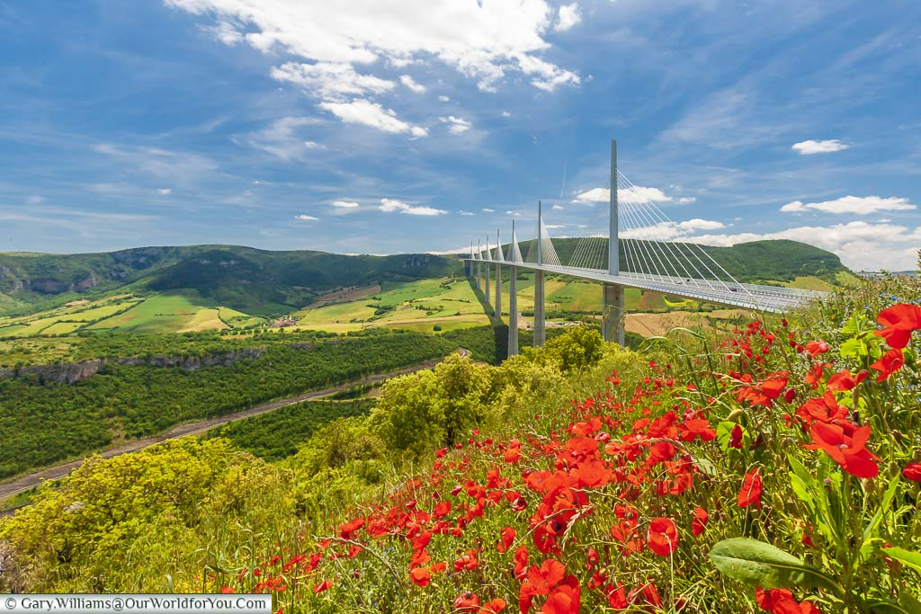 Vivid red wildflowers in front of the modern Norman Foster designed Millau Viaduct, spanning the lush green valley below.