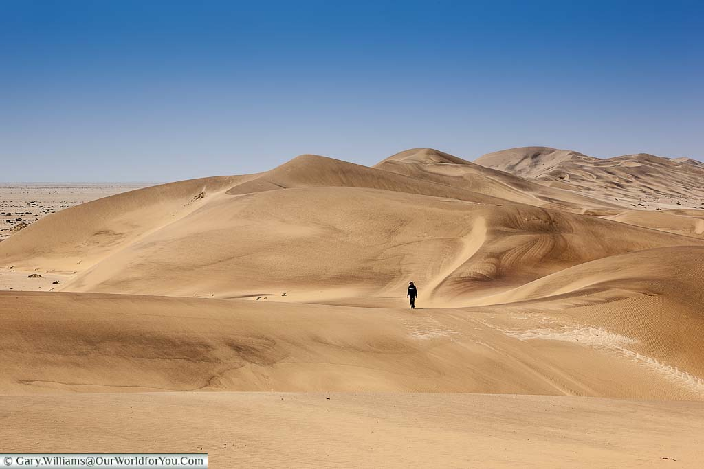 A lone figure wandering amount the sand dunes of Walvis Bay, outside, Swakopmund, Namibia