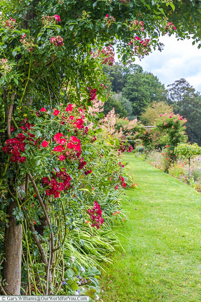 Stepping under the rose arch at one end of the terraced herbaceous border around the lawns in front of Ightham Mote