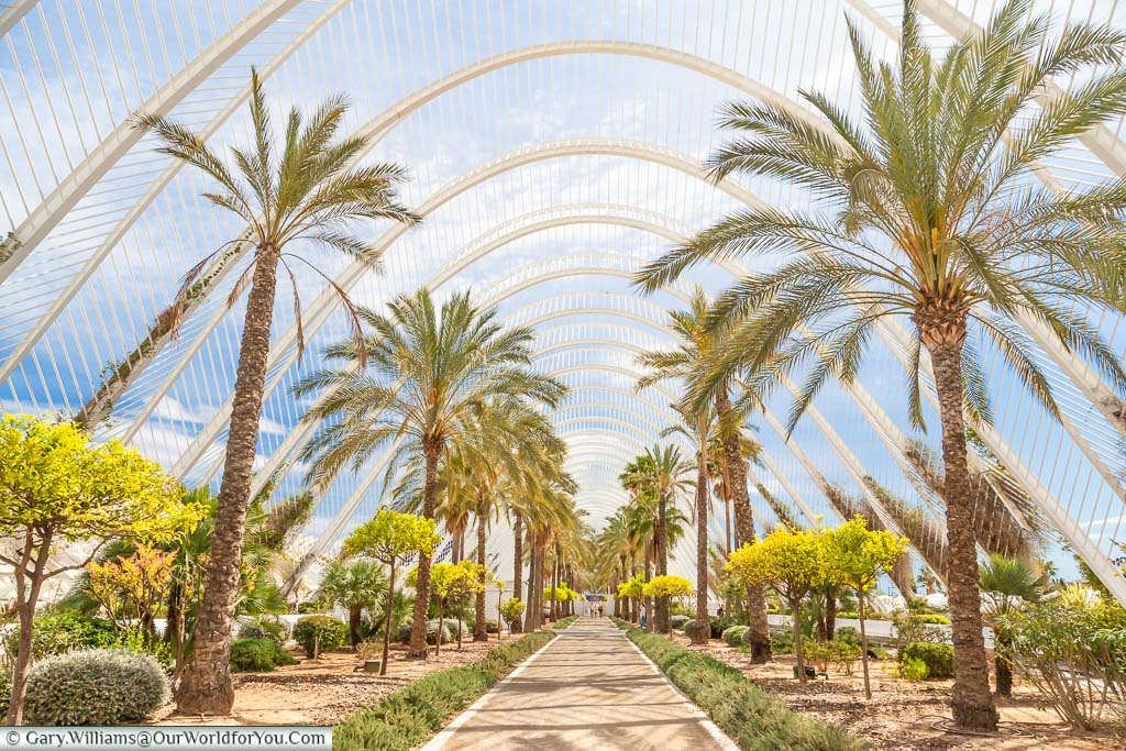 Palm trees line a path through a futurist garden of the Umbracle in Valencia's City of Arts and Sciences