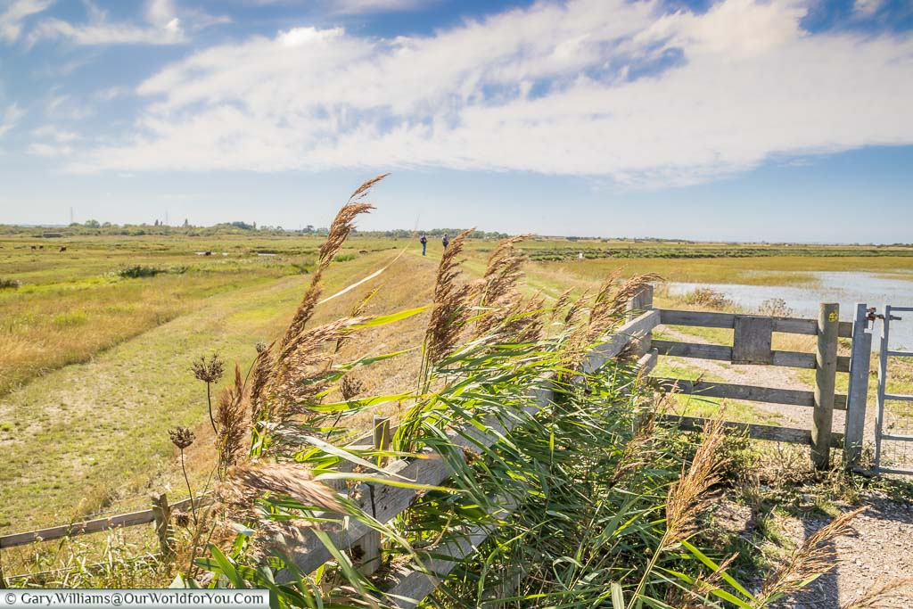 The pathway leading along the Saxon Shore Way at theOare Marshes Nature Reserve
