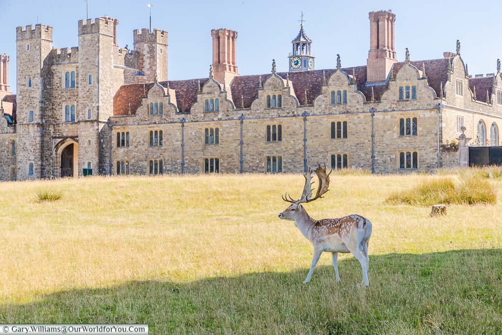 A young stag standing in the shade with Knole House in the distance